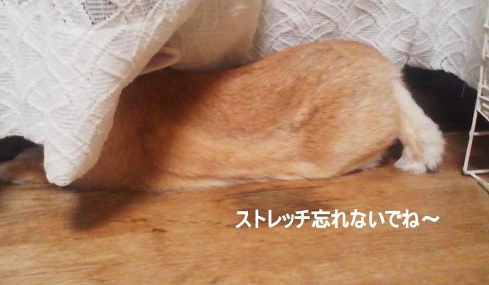 PAP_0064_20120603220354.jpg