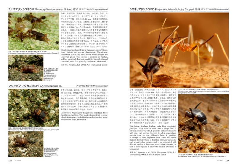 Arinosu_p128-129s.jpg