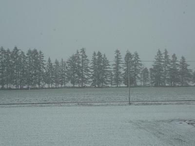 完全に雪景色です。
