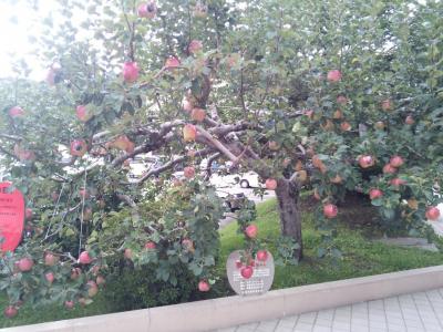toyohira-apple1.jpg