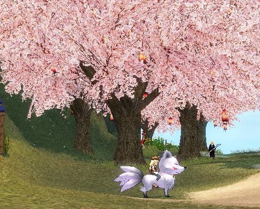 ネコしま桜