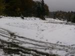 大根も雪の下