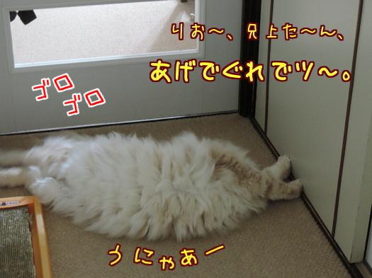 sato1284-a.jpg