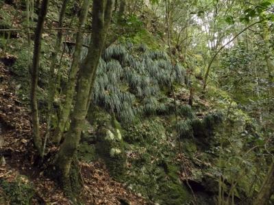 チャート岩壁