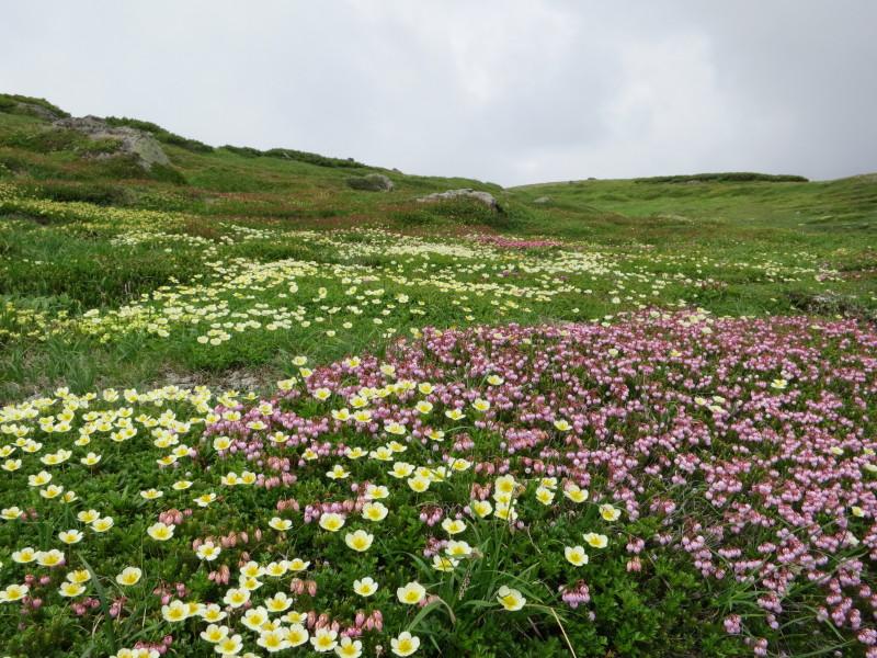 白雲分岐手前のお花畑
