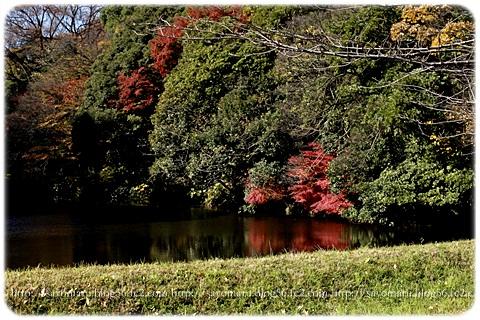 sayomaru11-577.jpg