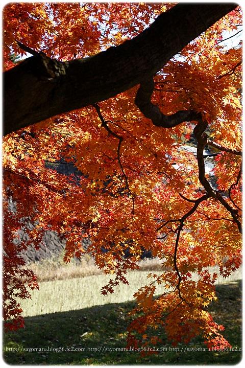 sayomaru11-580.jpg