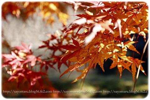 sayomaru11-582.jpg