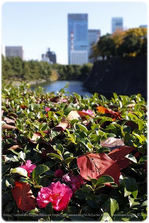 sayomaru11-613.jpg