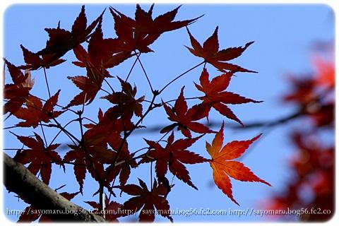 sayomaru11-628.jpg