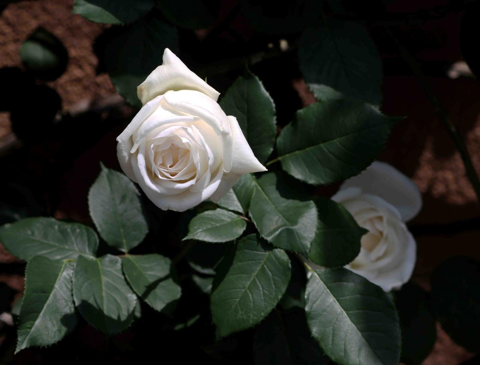 ホワイトクリスマス(3) 0516