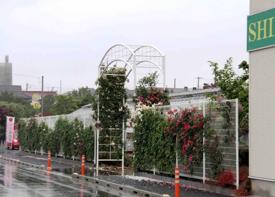 バラ農園(1)