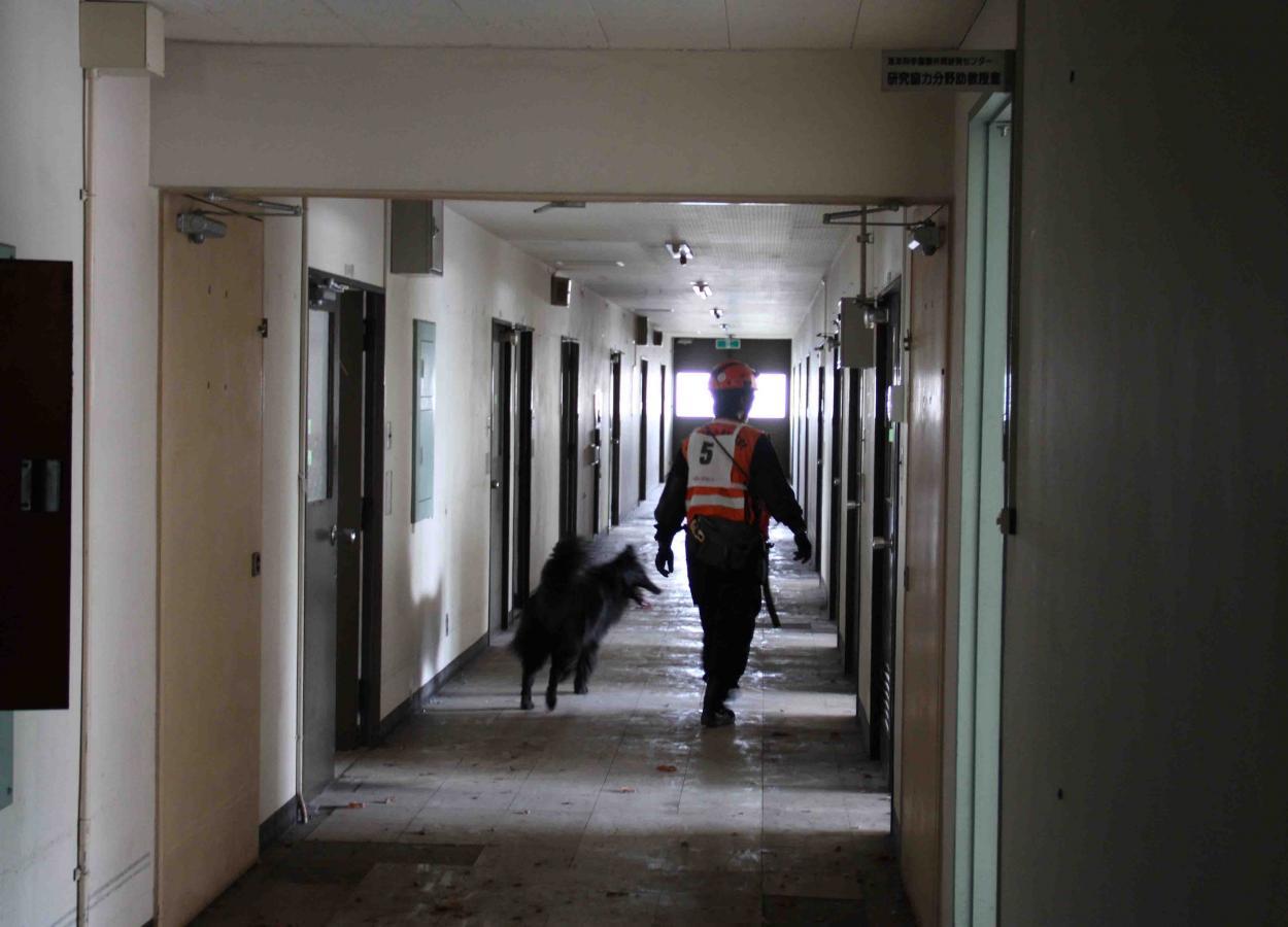 捜索犬の試験(4)
