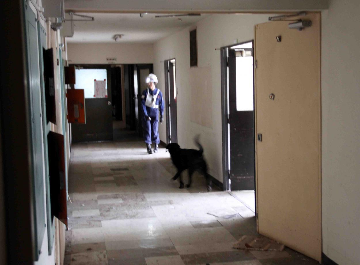 捜索犬の試験(5)