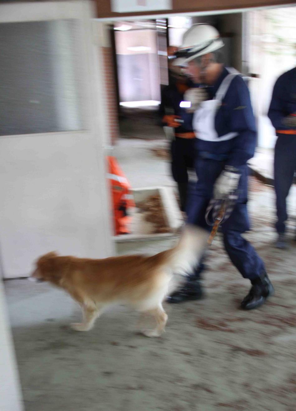 捜索犬の試験(6)