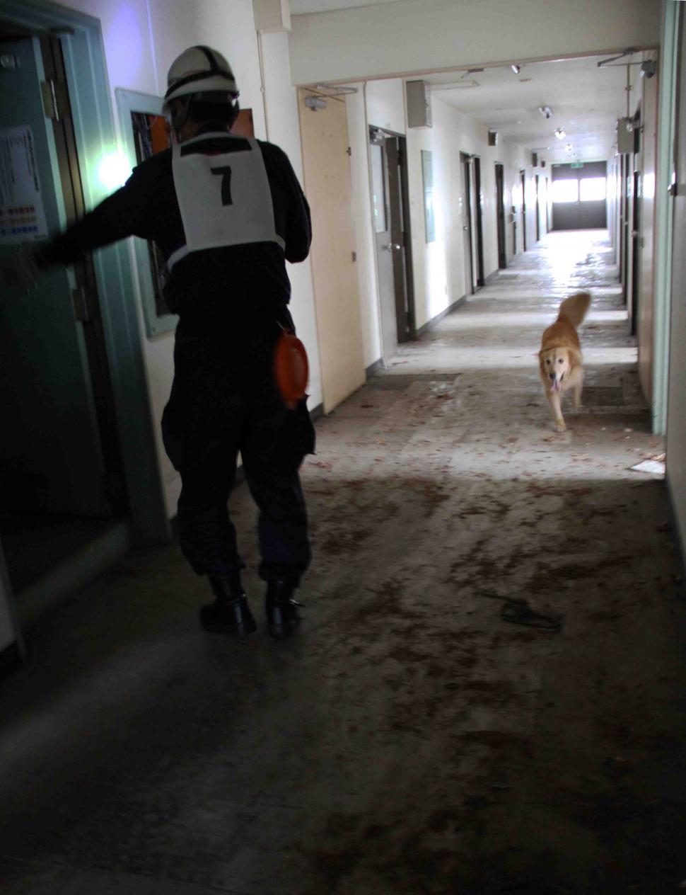 捜索犬の試験(7)