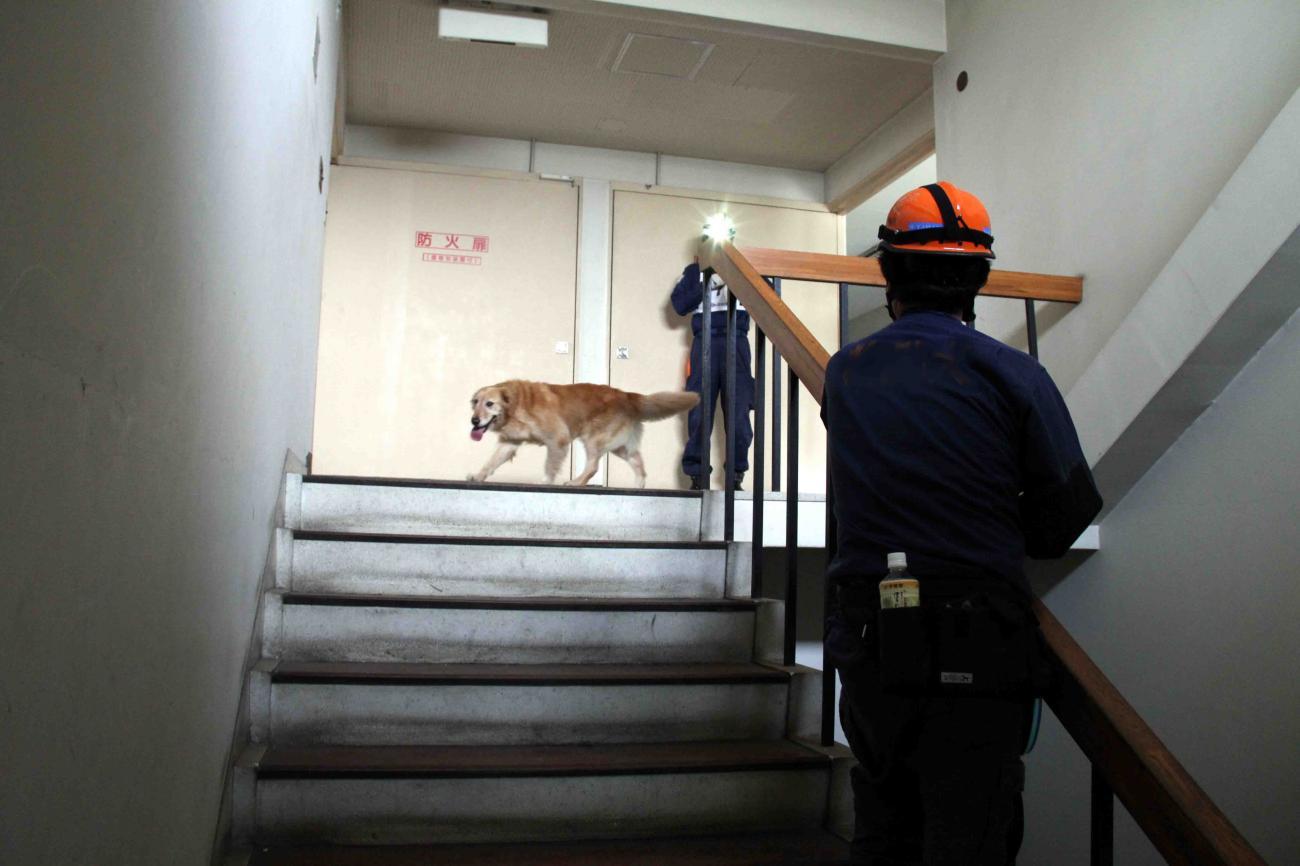 捜索犬の試験(8)