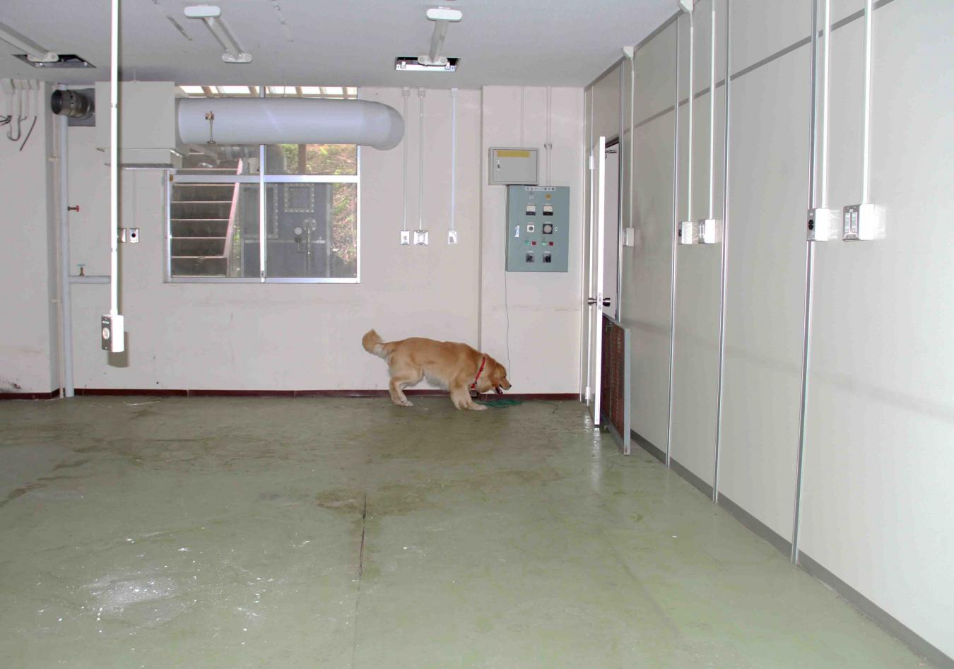 捜索犬の試験(9)