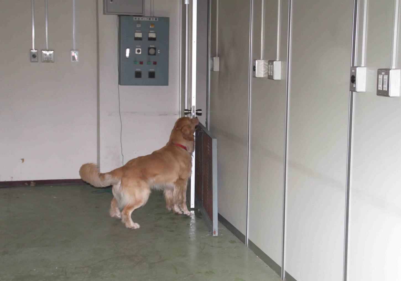 捜索犬の試験(13)