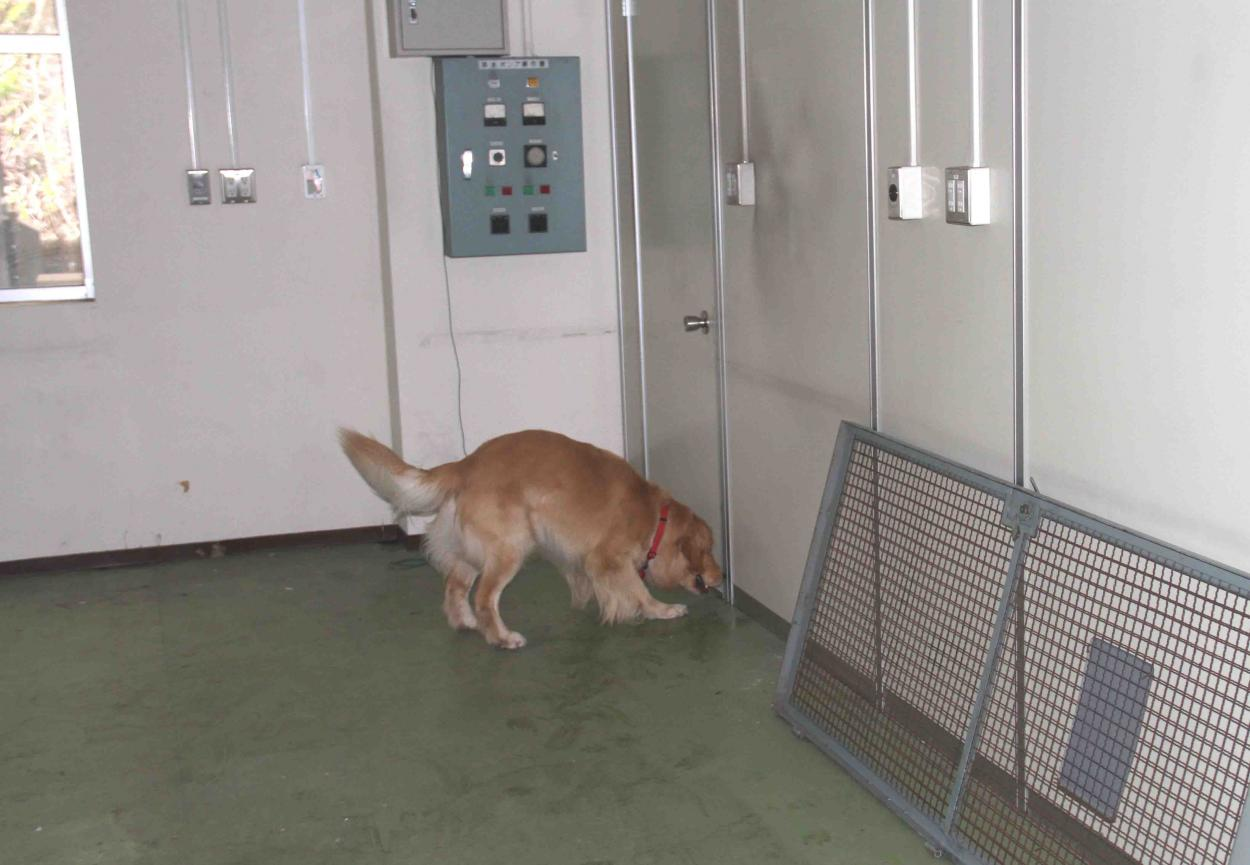 捜索犬の試験(14)
