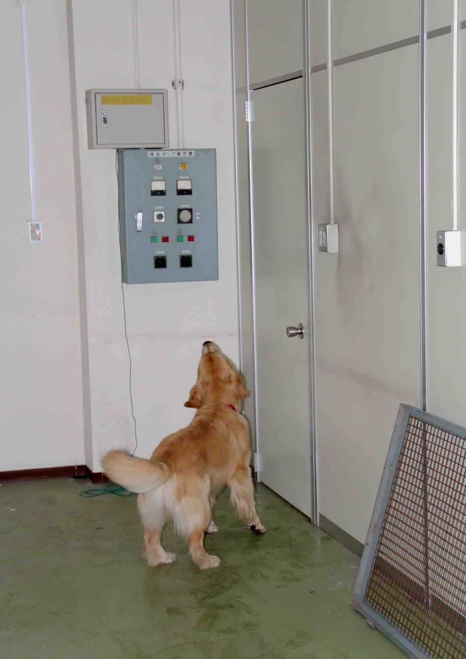 捜索犬の試験(15)