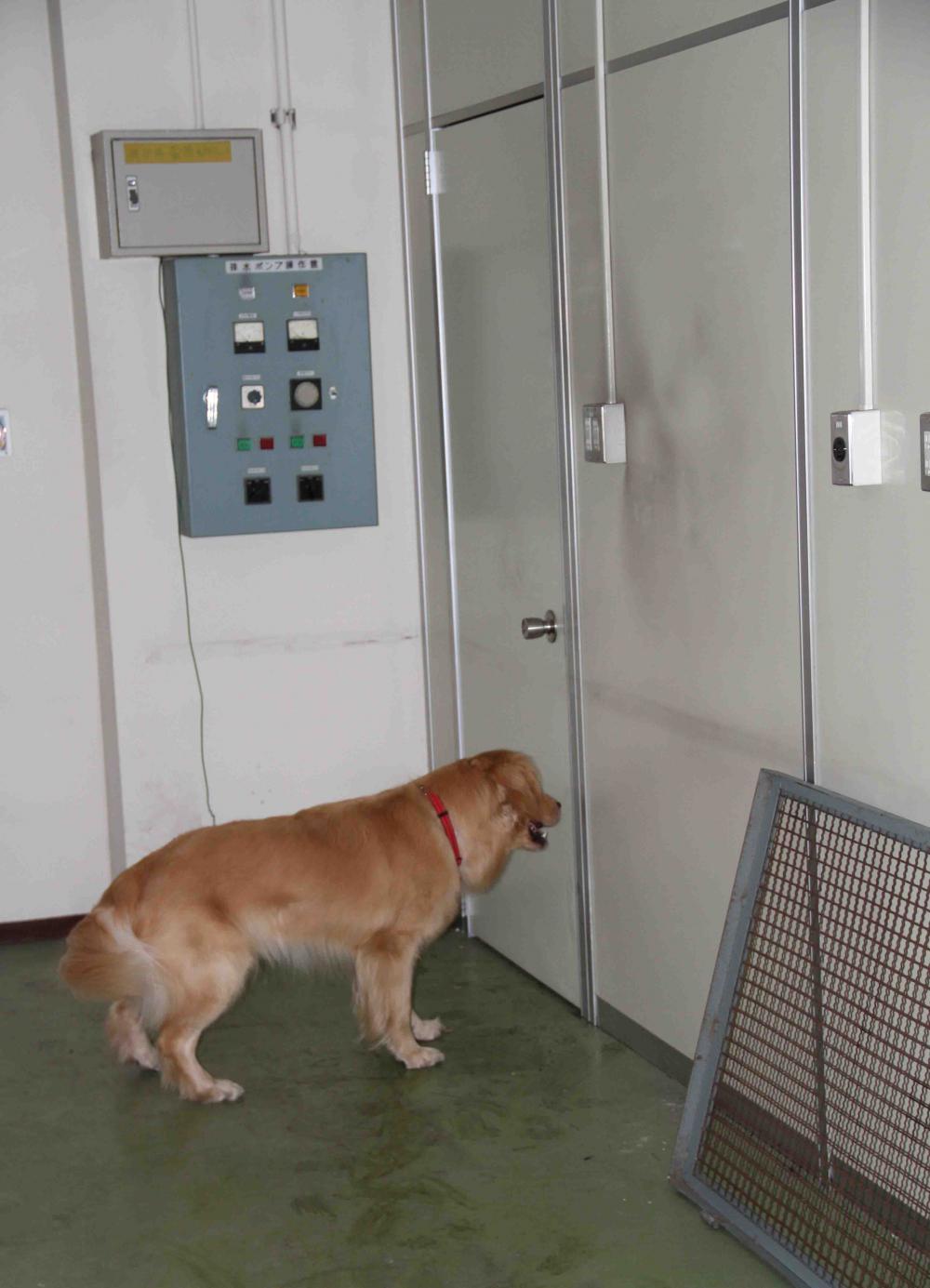 捜索犬の試験(16)