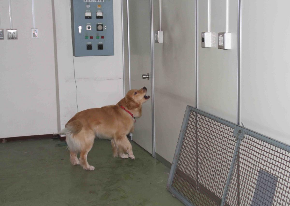捜索犬の試験(17)