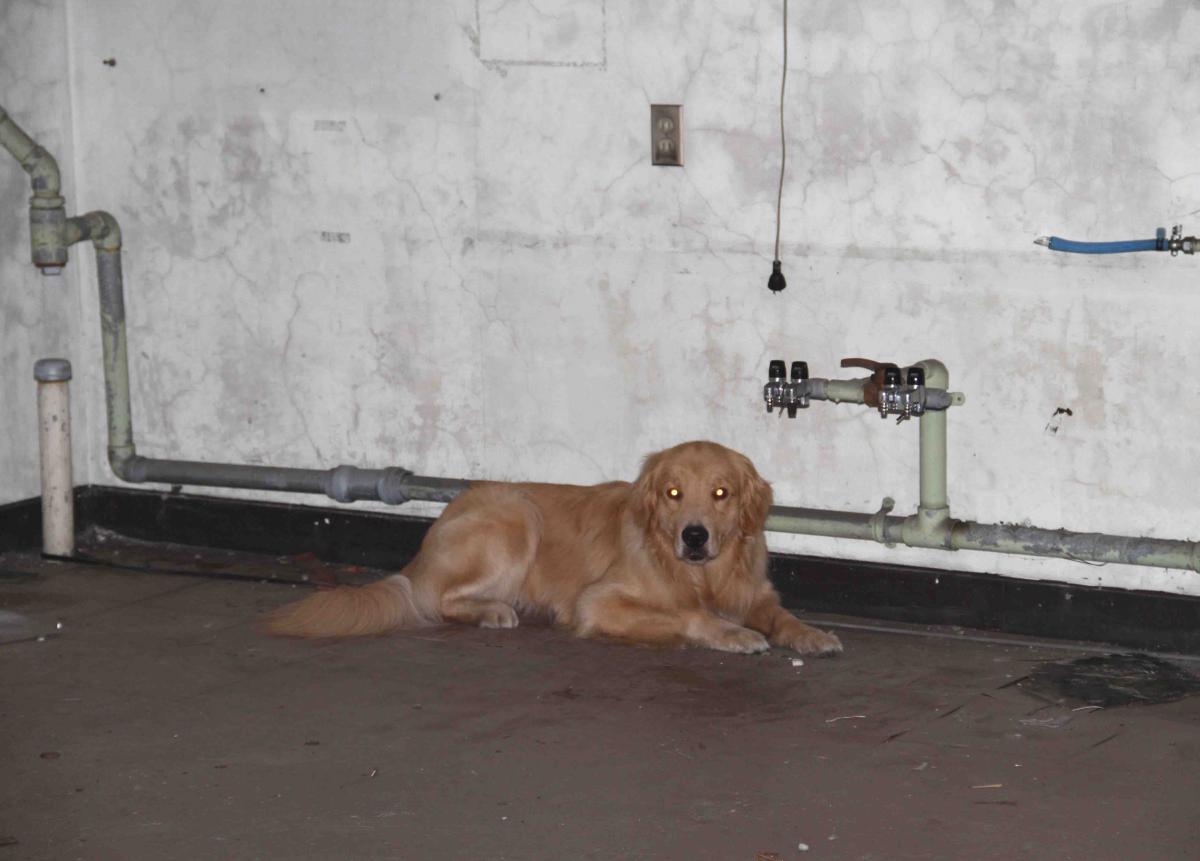 捜索犬の試験(17)2