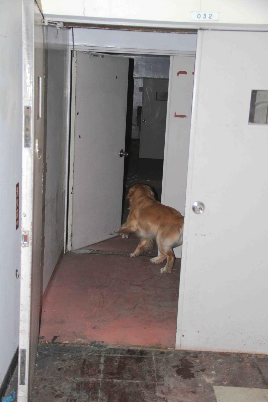捜索犬の試験(18)
