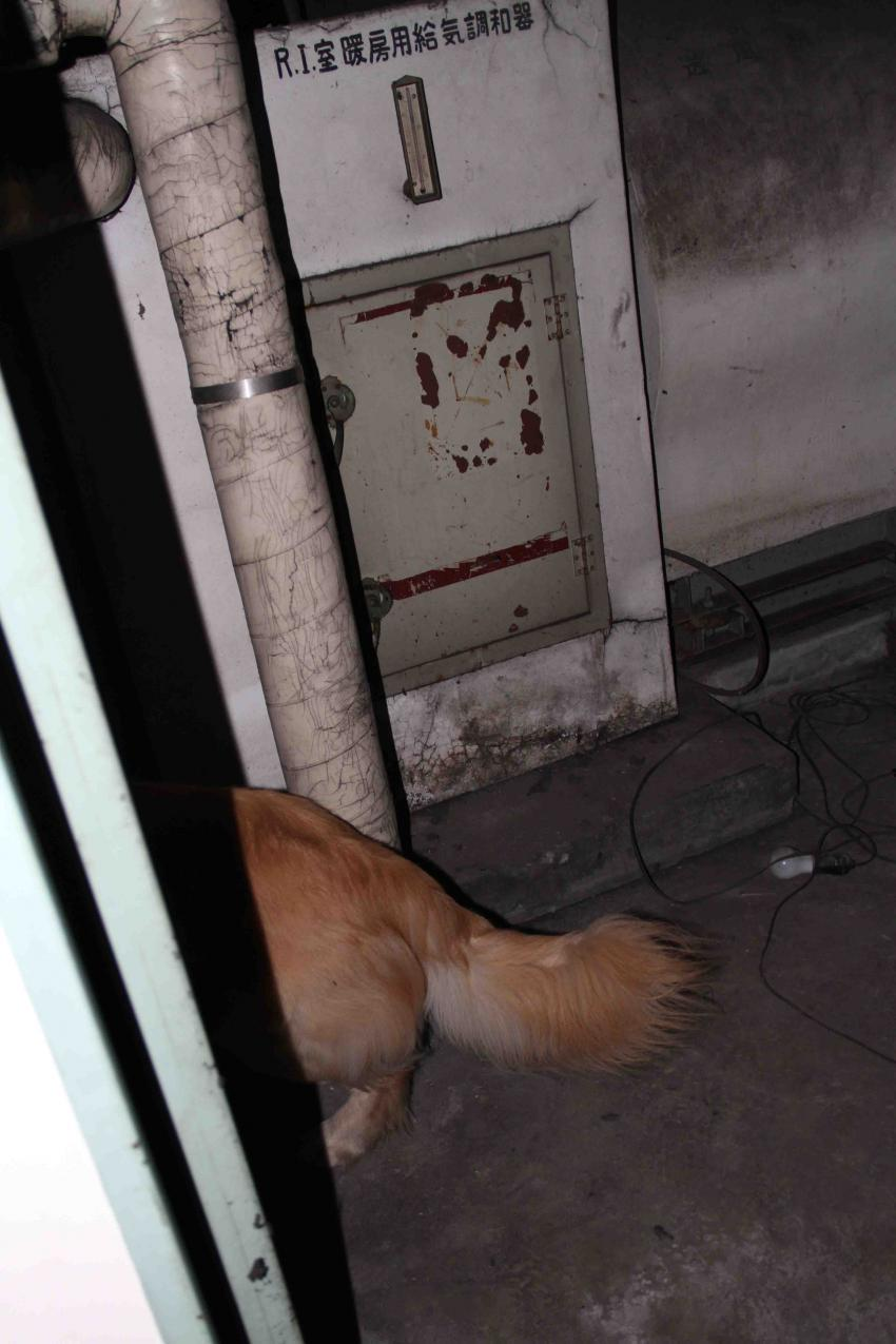 捜索犬の試験(19)