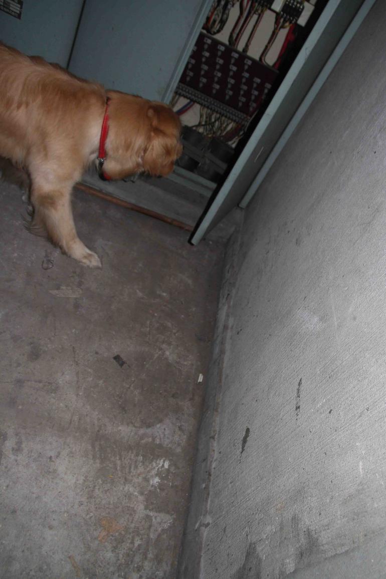 捜索犬の試験(20)