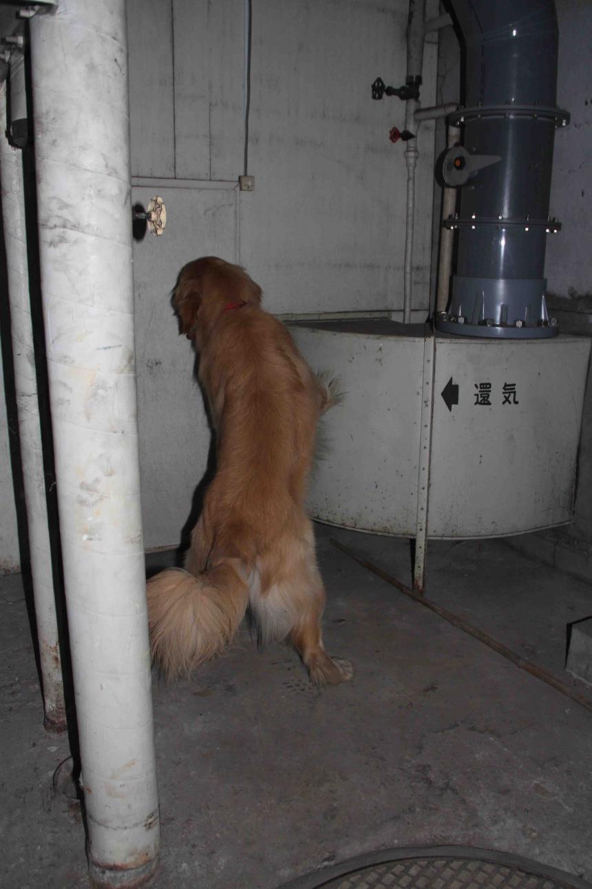 捜索犬の試験(21)