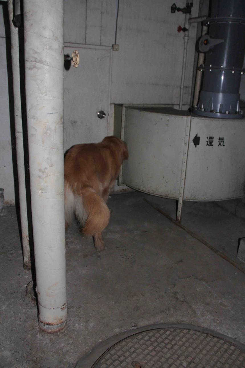 捜索犬の試験(22)