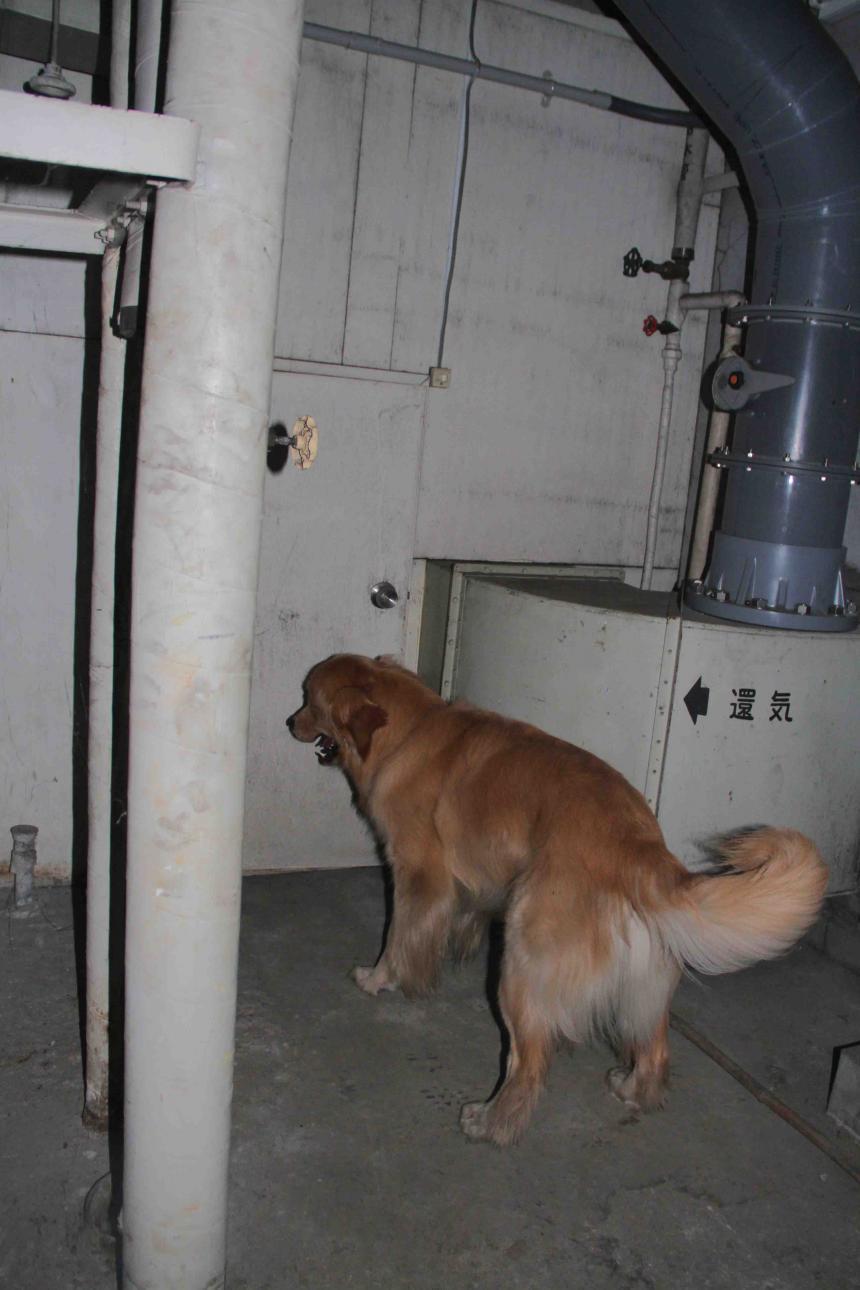 捜索犬の試験(24)