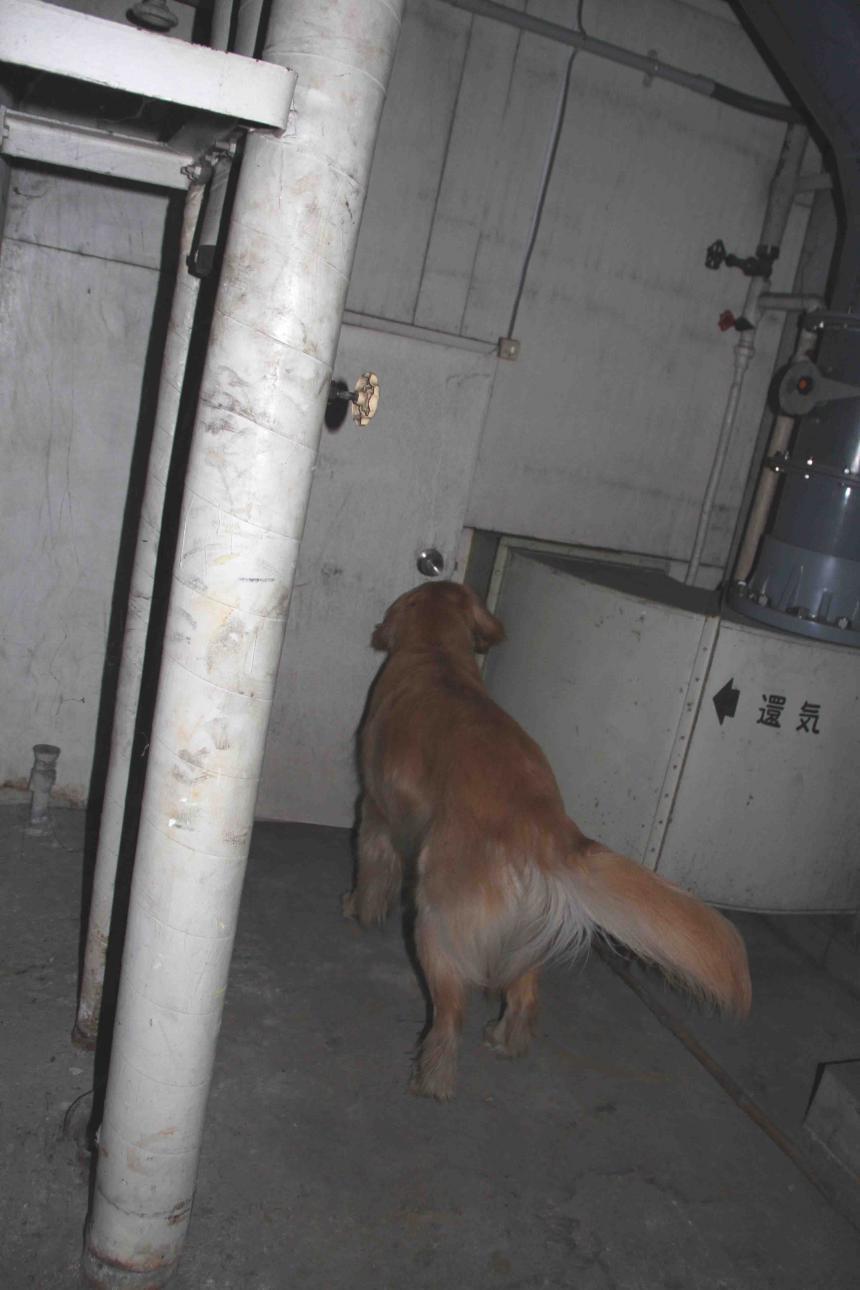 捜索犬の試験(25)