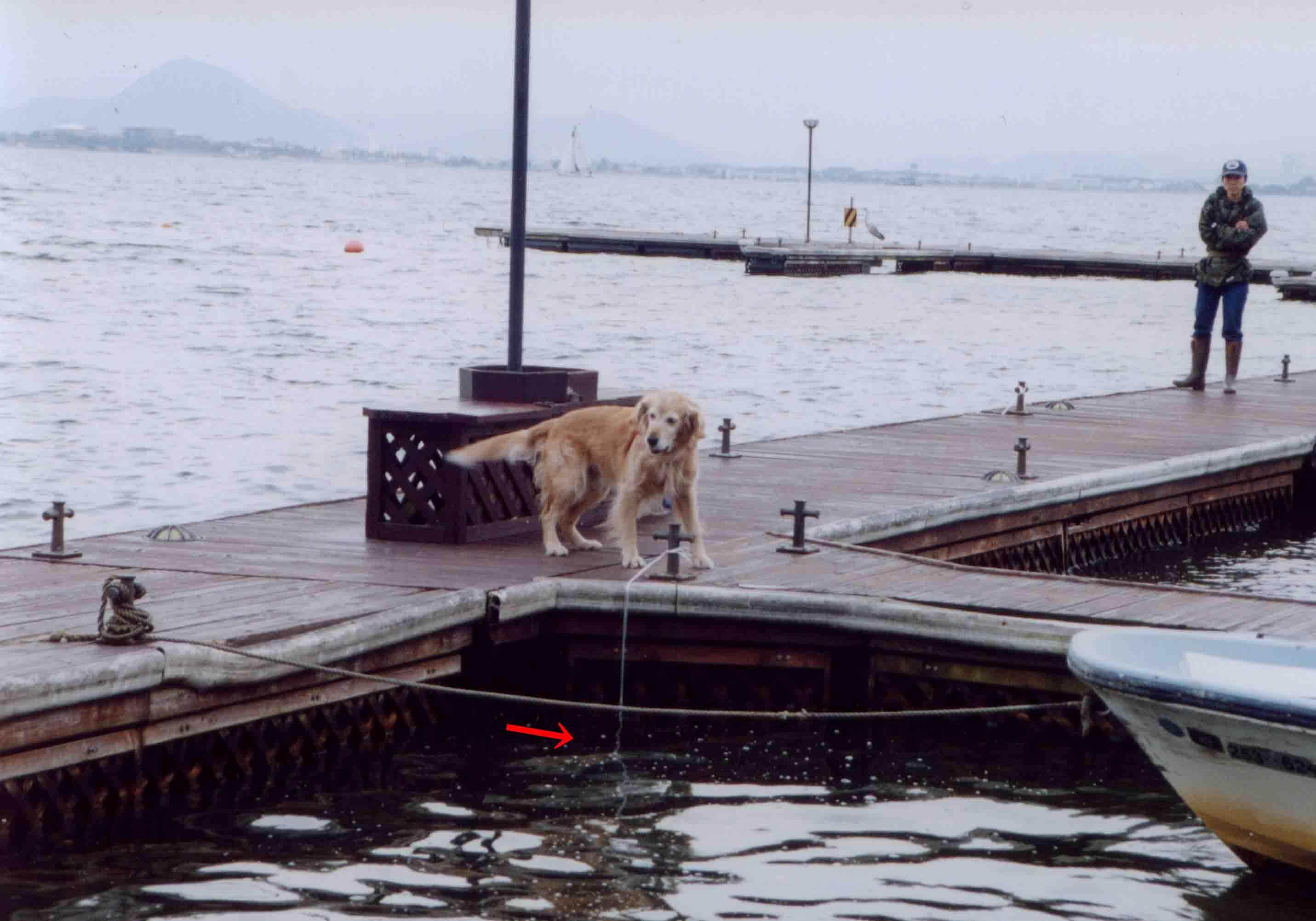 12年前の救助犬ウォーターサーチTC(1)