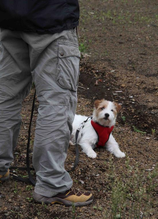 0624 待つ犬と人 IMG_1143