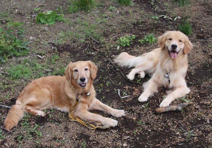 0624 待つ犬と人 IMG_1159