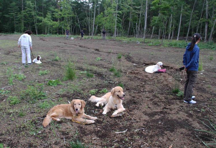 0624 待つ犬と人 IMG_1167