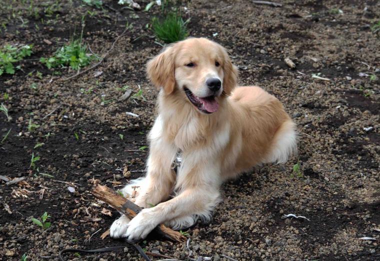 0624 待つ犬と人 IMG_1178