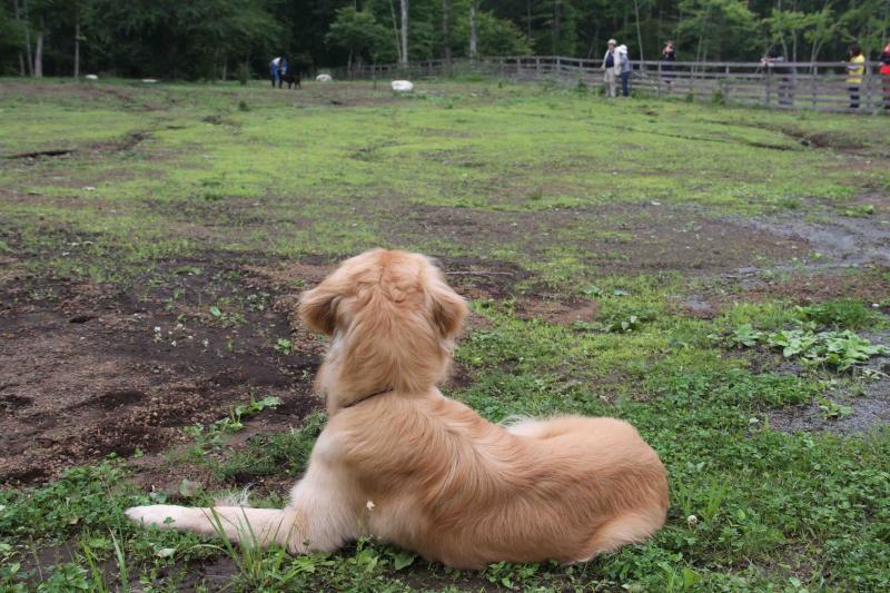 0624 待つ犬と人 IMG_1213
