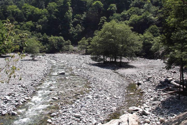 三峰川ですよ 0728(31)