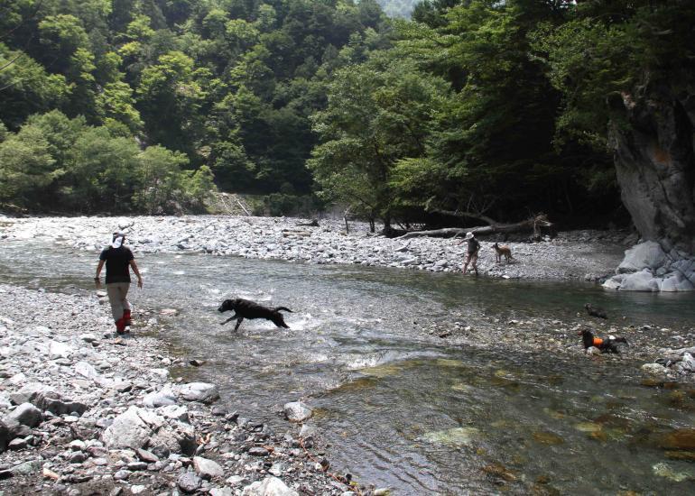 三峰川ですよ 0728(33)-3