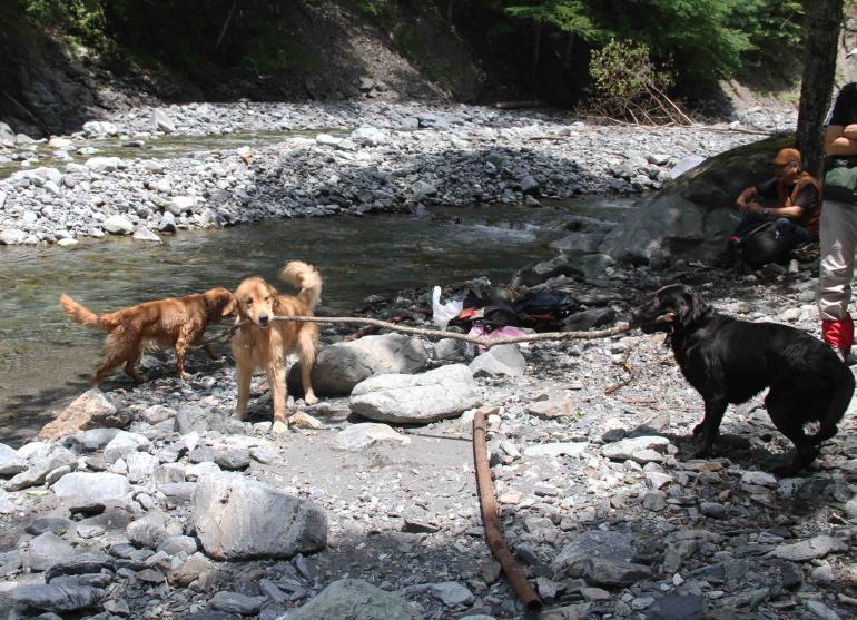 三峰川ですよ 0728(35)-2