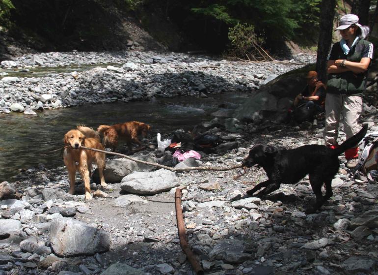三峰川ですよ 0728(35)-3