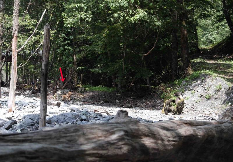 三峰川ですよ 0728(捜索Ⅰ)-1