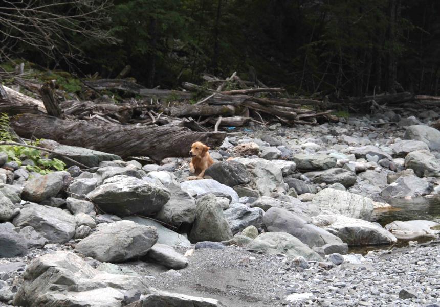 三峰川ですよ 0728(捜索Ⅱ)-3