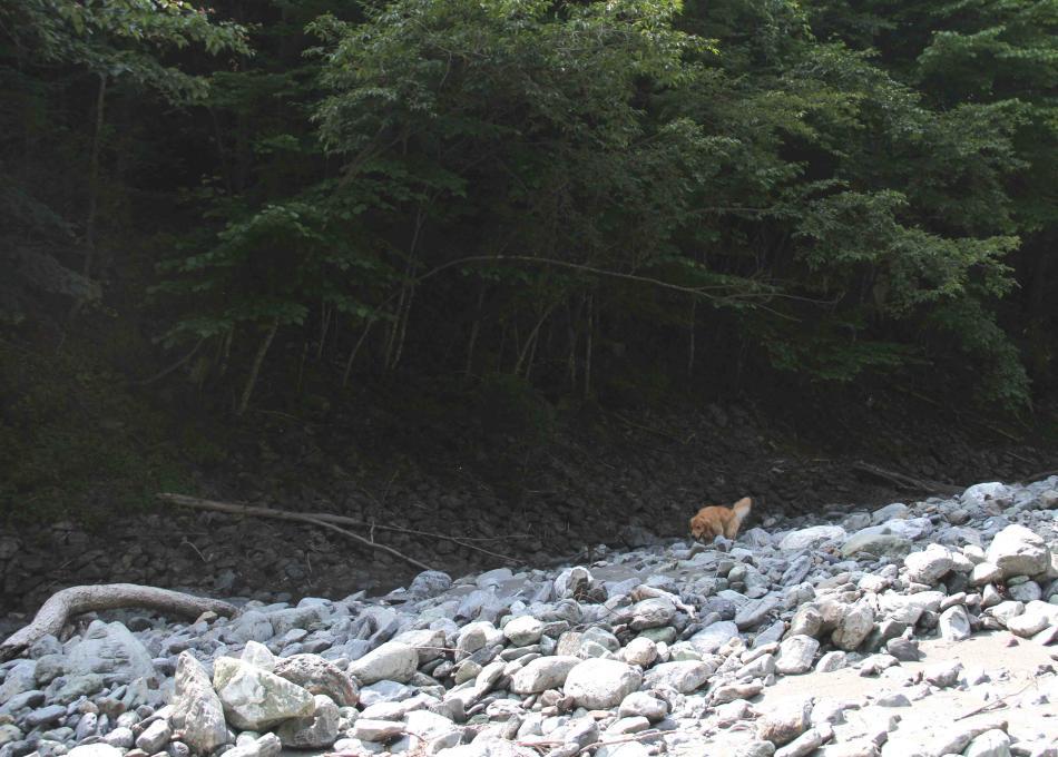 三峰川ですよ 0728(捜索Ⅳ)-3