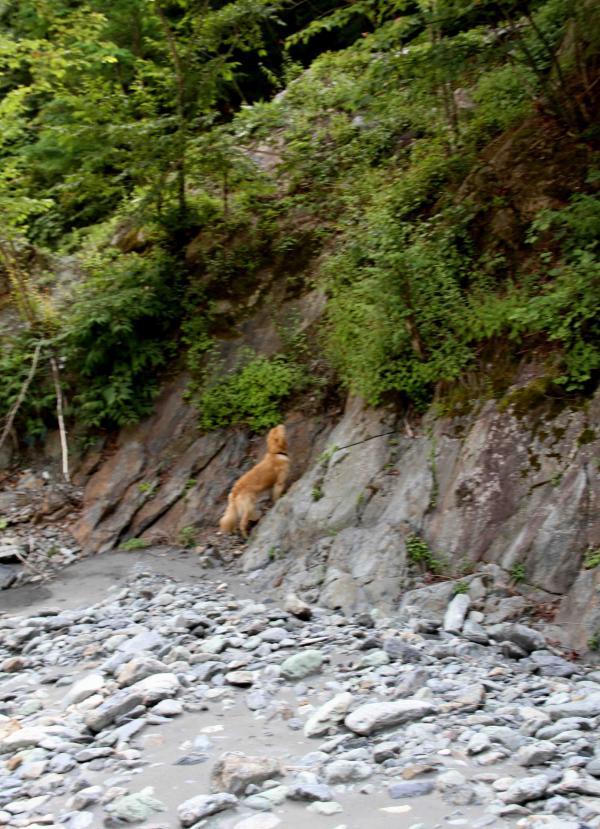 三峰川ですよ 0728(捜索Ⅳ)-4