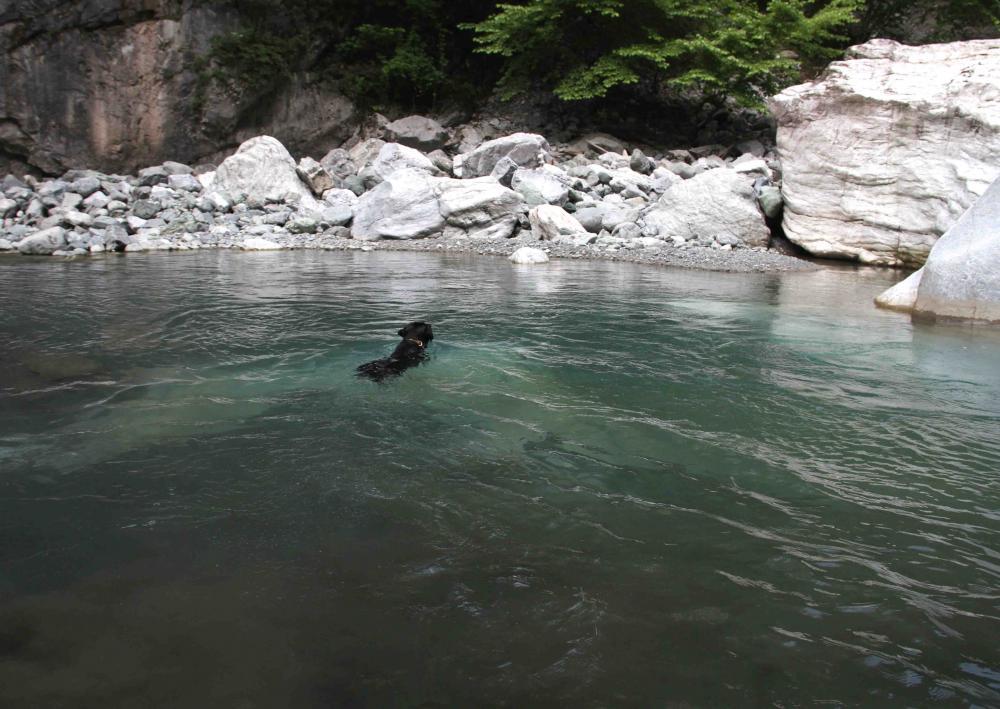 三峰川ですよ 0728-2(4)